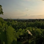 Chianti-vineyards-sunset
