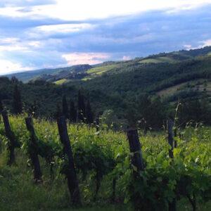 tuscany walking in chianti