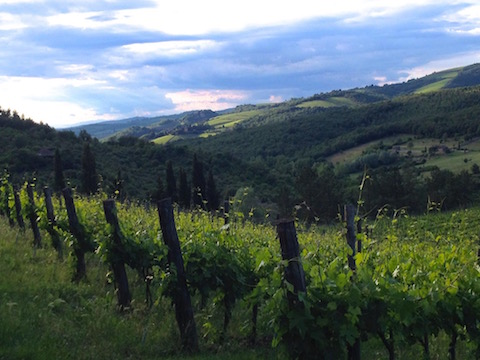 Trekking in Tuscany – The Chianti ancient league
