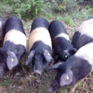 Tuscan Pork Salumi Cinta
